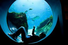 If only going to the aquarium was this peaceful, instead of listening to 10,000 children touring too.
