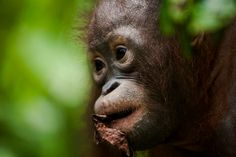 Indonesian forests are burning, people are choking. We need you to call on companies to END this!