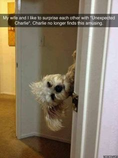 """Oh, poor Charlie. Always in the middle of a """"Surprise."""""""
