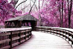 covered bridge surrounded by purple trees in Wildwood Metro Park in Toledo, Ohio Love Bridge, Old Bridges, Zen, Toledo Ohio, Old Barns, Covered Bridges, Malaga, Places To See, Nebraska