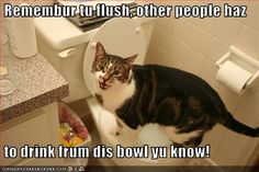 Funny Cat Pictures With Captions | ... cats with captions. funny dogs and cats with captions. cats caption