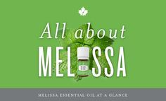 All About Melissa Essential Oil   Young Living Canada Blog