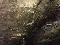 Sauta Cave, Alabama