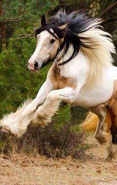 Equine ~ Wishing, I could RUN ~ Still, this guy is a BEAUTIFUL HORSE! ~ accident took that from my life... a long time ago! Thks be to OUR LORD GOD ALMIGHTY!