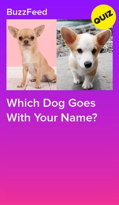 What dog does your name attract? Dog Quizzes, Quizzes Funny, Random Quizzes, Online Quizzes, Dog Breed Quiz, Spirit Animal Quiz, Best Buzzfeed Quizzes, Fun Quizzes To Take, Quizzes For Kids