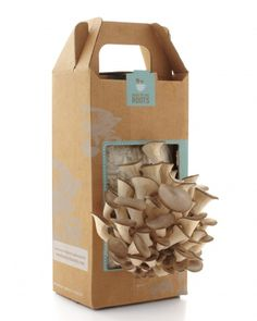 Grow Your Own Mushrooms! Great for kids to grow, and eat!