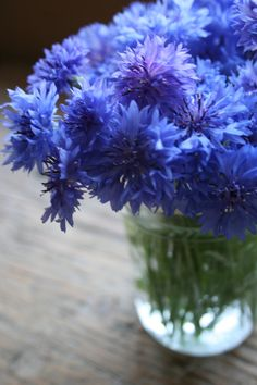 Bachelor Buttons or Conrflowers. I love them displayed in a simple clear glass. They flowers get to have center stage that way. Flowers In Jars, Blue Flowers, Beautiful Flowers, Bachelor Buttons, Bachelor Button Flowers, Cottage Wedding, Purple Garden, Language Of Flowers, Ikebana