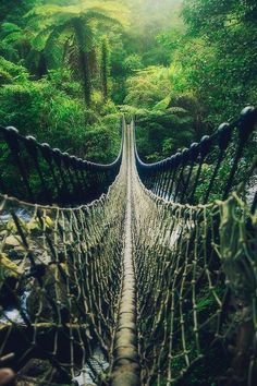 Beautiful bridge between the trees ☄ #nature