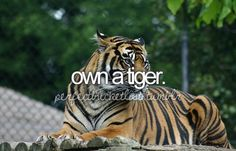 before i die, perfectbucketlist, tiger