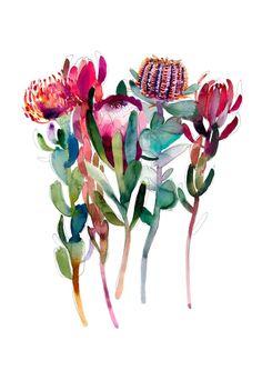'The Flower Thief' Greeting Card - Natalie Martin Watercolor Flowers, Watercolor Paintings, Watercolours, Flor Protea, Australian Native Flowers, Australian Art, Botanical Art, Art Inspo, Painting & Drawing