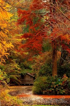 Forest House, Dandenong Mountains, Australia...who says you can't have a proper Autumn in Australia....you just have to move to Victoria...