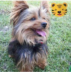 domingo! amo pasar los domingos con mama en El patio! 😊 #ExpertoAnimal #MundoAnimal #ReinoAnimal #Animales #Naturaleza #Mascotas #AnimalesdeCompañía #AnimalesGraciosos #AnimalesTiernos