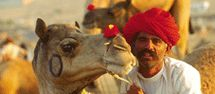 Pushkar Fair, also known as Pushkar Camel Fair and Pushkar Cattle Fair is a major event in the Travel Calendar of Rajasthan. Pushkar Festival is popular among tourists coming to Rajasthan India from all over the world.