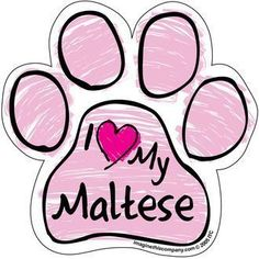 I LOVE MY CHIWEENIE (chihuahua and dachshund)pink SCRIBBLE CAR PAW MAGNET (also available in blue) Let other drivers know and show your love of your fur babies. These are made of durable UV and Water resistant Vinyl on strong magnet. Maltipoo, Goldendoodle, Pomeranians, Chihuahuas, Dachshunds, Chiweenie Dogs, Terrier Dogs, Pitbull Terrier, Boston Terrier