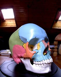 A model of skull from an anatomical model Scanned with the MakerBot Digitizer Desktop Scanner Human Skull Anatomy, Skull Model, 3d Scanners, 3d Printer Projects, 3d Prints, Cubism, Archaeology, Sonic The Hedgehog, Disney Characters