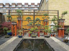 Jo-Anne & Howard's London Home & Bonsai Garden — House Tour Bonsai Art, Bonsai Garden, Bonsai Trees, Jade Bonsai, Howard House, Bonsai Pruning, Welcome To My House, Garden Whimsy, Miniature Trees