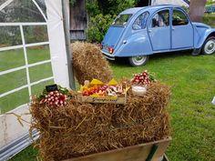 Toque, Food Truck, Mobile Food Cart, Food Trucks