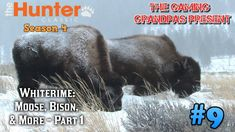 Whiterime: Bison, Moose, & More - Part 1! | The Hunter Classic