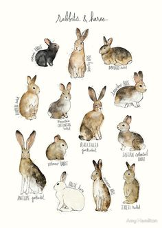 Rabbits & Hares von Amy Hamilton
