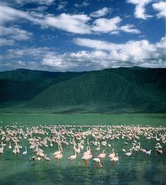 Ngorongora Crater in Tanzania, Africa is a must see safari...