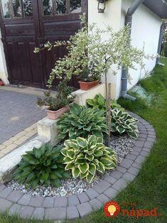 Úžasné nápady, ako zakomponovať mladé a malé stromčeky do vašej záhrady tak, aby ste ich zvýraznili a vyzdvihli ich jemnú krásu.
