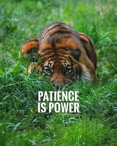 Patience quotes and sayings TOP PATIENCE quotes and sayings : Patience is power. Boss Quotes, Attitude Quotes, Me Quotes, Motivational Quotes, Inspirational Quotes, Strong Quotes, Qoutes, Patience Citation, Patience Quotes