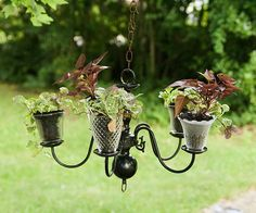 Upcycle a cast-off chandelier into a striking planter to hang. Note the inverted glass light covers as pots.