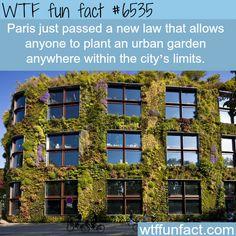 Paris' urban gardens - WTF fun facts