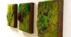 Si vives en plena ciudad y echas de menos la naturaleza, una buena idea es instalar en tu casa una de estas paredes de musgo, ¡quedan geniales!