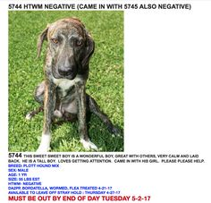 --  T, Grable Brazoria County Sheriff's Office Livestock and Animal Control Division Angleton, TX  ( Brazoria County) Location:  45 Minutes South Of Houston, Tx  PH:   979-388-2365 Cell : 979-997-2486