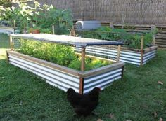 Raised garden beds - what a great idea to keep out the chickens and provide shade in the hot summer months!