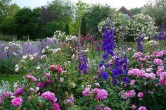 Sommer im Rosengarten