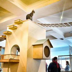 Maison de Moggy: Scotland's First Cat Cafe