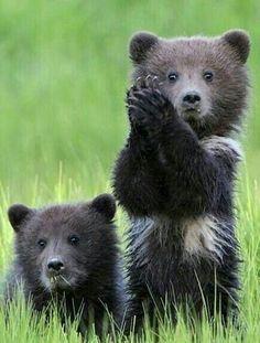 Bear cubs AWWW!! - SO 'UNBEARABLY' CUTE!! ;)