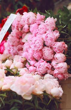 Pink peonies at flower market