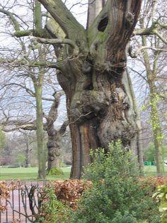 Ents tree by revktlee, via Flickr