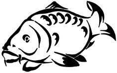 Animals For > Mirror Carp Drawing