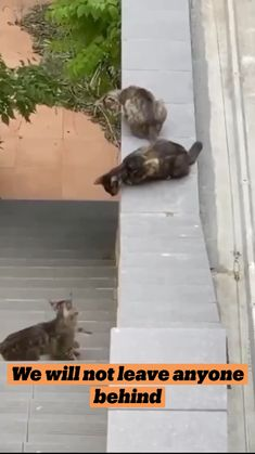 Funny Animal Jokes, Funny Cute Cats, Cute Baby Cats, Cute Little Animals, Cute Funny Animals, Kittens Cutest, Cats And Kittens, Baby Animals Pictures, Cute Animal Videos