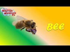 Los insectos en inglés para niños
