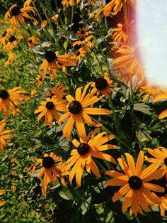 Sun Aesthetic, Best Urdu Poetry Images, Girly Pictures, Claude Monet, Insta Story, Iphone Wallpapers, Yellow Flowers, Instagram Feed, Emoji