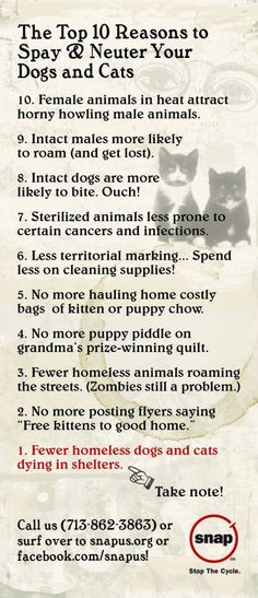Top 10 Reasons to Spay and Neuter