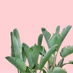 #PlantsOnPink by @thedreamlife_design