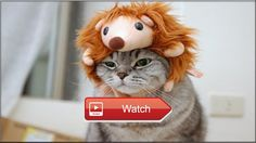 Funny Cats Compilation Best Funny Cat Videos Ever  Funny cats compilation Best funny cat videos ever Hope you like a new funny cat…