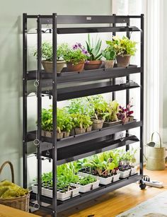 Indoor garden idea....I wonder if I could get Kelsey to rig something like this up for me :)