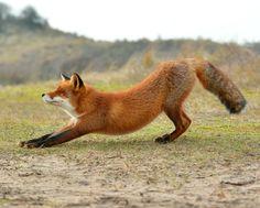 Stretch! Photo: Dexter Bressers.