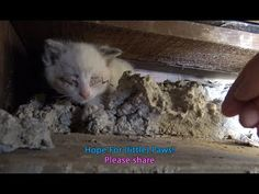 Hope For (little) Paws - I need a diet so I can crawl into places like this!!!  :-) - YouTube