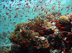 Scuba diving in Sharm El Sheikh, Egypt