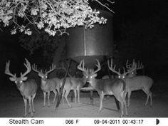 Taken from my buddies trail cam in Texas