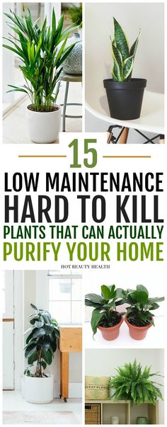 The best air purifying plants that are super low maintenance and hard to kill. ( gerbera daises, snake plants, peace lily, boston ferns, and more) Many need only low light and are also pet safe. Inside Plants, Cool Plants, Small Plants, Green Plants, Good Plants For Indoors, Plants In The Home, Home Decor With Plants, Popular House Plants, Inside Garden