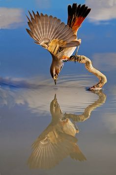 bird reflection
